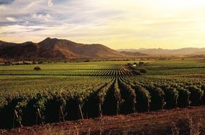 Компания Errazuriz намерена стать лидером чилийского виноделия