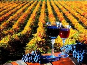 Вино значительно подорожает