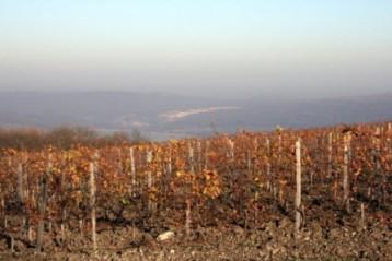 Где рождаются российские вина
