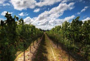 Украинцев хотят обобрать на новые виноградники