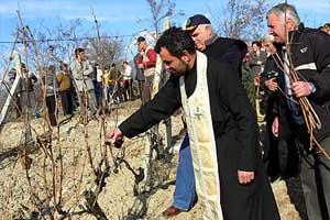 Трифон Зарезан — праздник виноградарей в Болгарии