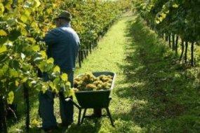Болгария экспортировала около 45 млн. литров вина в 2010 году