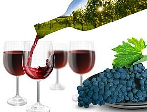 Греческие виноделы представили тысячи сортов вин