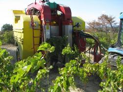 Комбайны для уборки винограда будут собирать в Староминской
