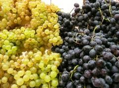 В Австралии падает урожай технического винограда