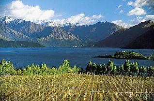 В 2011 году Новая Зеландия произведет рекордный объем вина