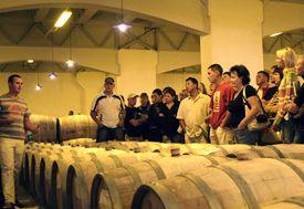 Миллионер будет развивать в Севастополе винный туризм