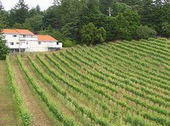Бывший министр сельского хозяйства занялся виноделием