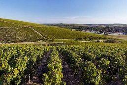 Украина разработает кадастр виноградников