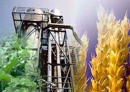 Неработающие спиртзаводы Украины произведут биотопливо