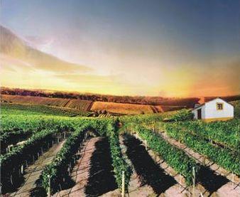Салон «Вина Португалии CVR Tejo» приглашает