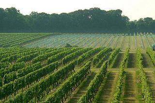Виноградники и прочее