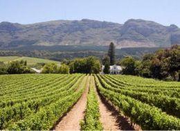 Инновации на испанских виноградниках