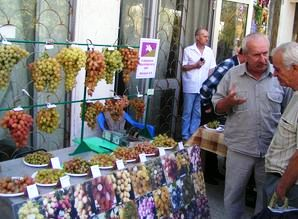 Виноградари России и Украины представят свою продукцию на выставке в Новочеркасске