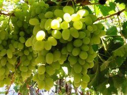 Молдова сократила экспорт вина в I полугодии 2011 г. на 5%
