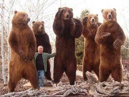 """""""Володя и медведи"""" пришли в суд"""
