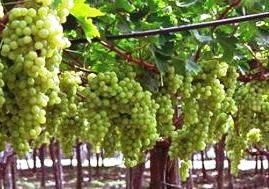 Армения: Спрос на 150 тыс. тонн