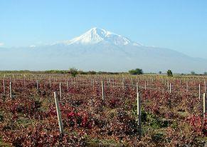 В Армении предпринимаются меры по развитию виноделия