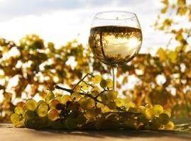 На Ставрополье произвели вино не хуже французского. ВИДЕО