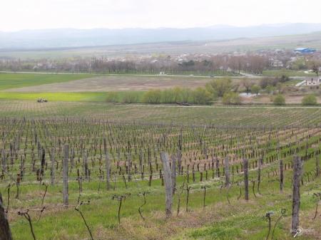 Первая годовщина «Черноморских гаражных вин»