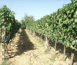 В Казахстане американский профессор намерен разбить большой виноградник