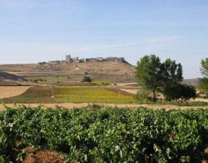 Лучший винодельческий регион мира нашелся в Испании