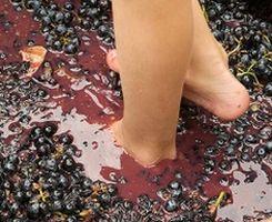 Французское виноделие возникло на основе итальянского