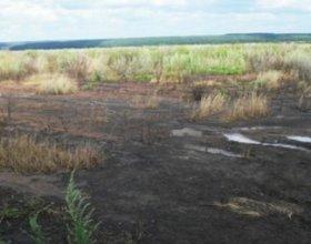 Ардымский спиртзавод оштрафовали за загрязнение земель