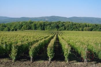 Сколько стоит сделать вино