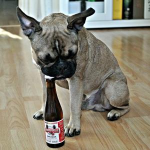В Великобритании на рынок выходит пиво для собак