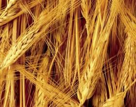 Евросоюз: Запасы пивоваренного и фуражного ячменя в этом году достаточные