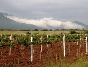 Виноделы: Россия без труда могла бы ввести запрет на импорт вина ЕС