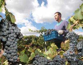 Крым просит федеральный центр снизить ставки акциза на вино