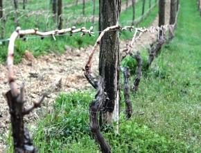 Виноделы Крыма попросили продлить переходный период