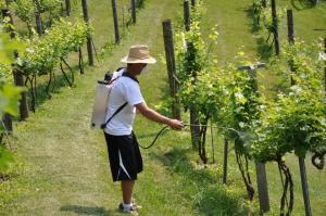 Виноделы получат от Bayer компенсацию за загубленный урожай