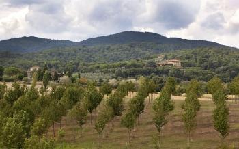 Тосканское вино Стинга названо одним из лучших в Италии