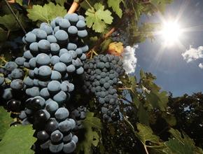 Бывший акционер банка «Россия» займется виноделием в Крыму