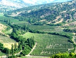 Севастополь может получить собственный географический бренд для виноделия
