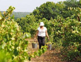 Минсельхоз пообещал вывести российское вино на мировой уровень