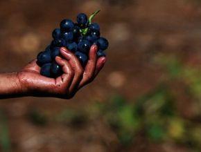 Вино с высоты 2016. Итоги года для российского виноделия