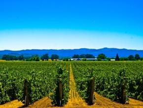 Вино с географией: терруар «Кубань» увеличился еще на 3 территории