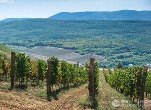 Всю крымскую винодельческую отрасль скоро приватизируют, считают эксперты