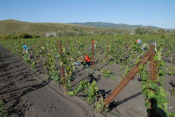 Выращивание в алтайском крае 797