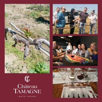 Винодельня «Кубань-Вино» запустила новый туристический проект - комплексные «Винные туры»