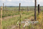 Фестиваль фермеров-виноделов  пройдет 30 июня под Анапой. Вход для всех – свободный! ФОТО