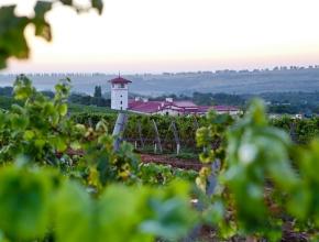 """""""Лефкадия"""" получила лицензию на выпуск вин с защищенным географическим указанием"""