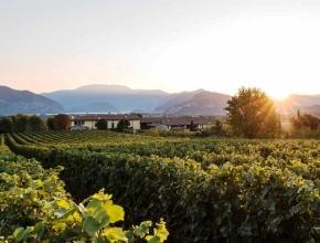 В Италии сократилось производство вина