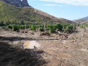 «Массандра» оценила ущерб для виноградников от стихии в Крыму