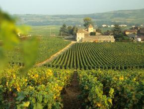 График: Франция сократит производство вина до минимума за 60 лет