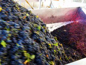 Госдума готова принять в октябре в первом чтении законопроект о виноградарстве и виноделии